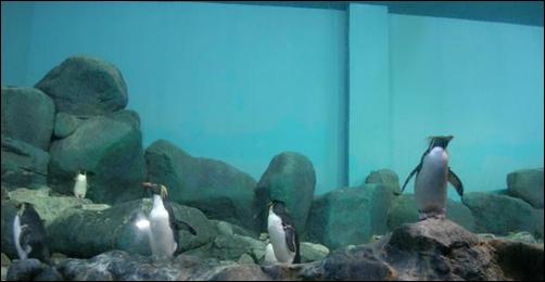 عالم الماء جزيرة لنكاوى 2012 image_thumb[5].png?i